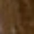 Profile picture of xthomas_1yahoo-com